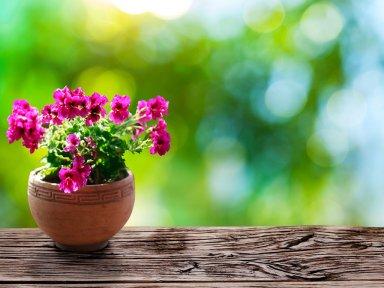 Комнатные растения, с пользой для вас