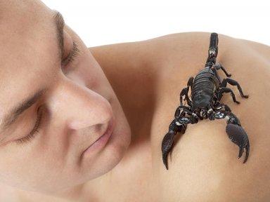 Практические советы как вести себя с скорпионом