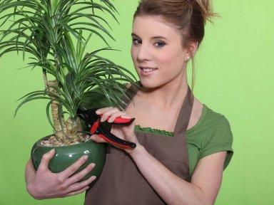 Кадочные растения. Юкка