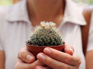 Чем болеют кактусы?