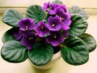 Растение в подарок: советы и нюансы