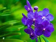Орхидея — самый красивый цветок для дома